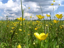 Flores, hierba, nubes Foto de archivo