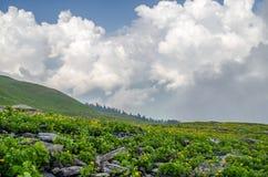 Flores Himalayan Foto de archivo libre de regalías