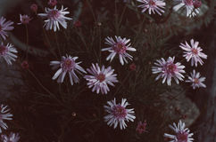 Flores III imagenes de archivo