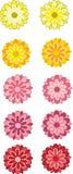 Flores ilustradas do Gerbera Fotografia de Stock