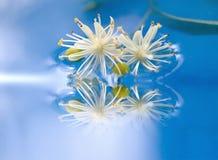 Flores incomuns Foto de Stock Royalty Free
