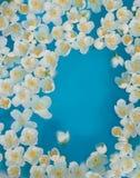 Flores incomuns da água Fotos de Stock Royalty Free