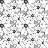 Flores inconsútiles con el modelo de flores blancas en fondo verde claro Imágenes de archivo libres de regalías