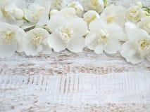 Flores inglesas do corniso Foto de Stock Royalty Free