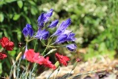 Flores inglesas do jardim do país fotografia de stock royalty free