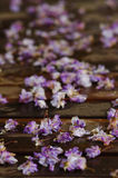 Flores inoperantes em uma varanda Imagem de Stock