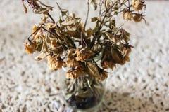 Flores inoperantes, fundo branco fotos de stock