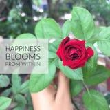 Flores inspiradores inspiradas da felicidade do ` das citações de dentro de ` Fotografia de Stock Royalty Free