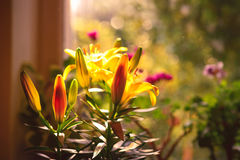 Flores interiores imagem de stock