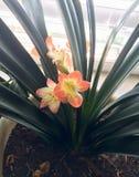 Flores interiores fotos de archivo libres de regalías
