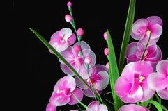 Flores isoladas Imagem de Stock