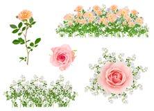 Flores isoladas arranjadas Fotos de Stock Royalty Free