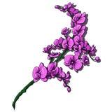 Flores isoladas no fundo branco ilustração stock