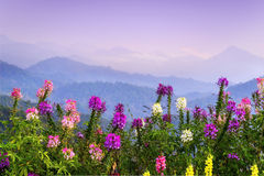 Flores isoladas no fundo dos montes imagem de stock