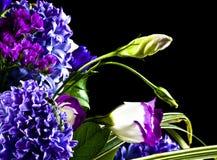 Flores isoladas no preto Foto de Stock