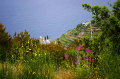 Flores italianas en el lado de un acantilado Fotografía de archivo libre de regalías