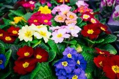 Flores japonesas Foto de Stock