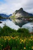 Flores, lago e montanha fotografia de stock royalty free