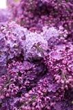 Flores lilás Imagens de Stock Royalty Free