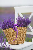 Flores lilás da alfazema em uma cesta de vime Fotografia de Stock