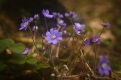 flores lilás da floresta foto de stock