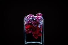 Flores lilás e tinta que rodam na água em um vaso de vidro em um fundo preto Fotografia de Stock