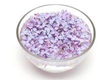 Flores lilás em uma bacia de vidro com água Fotografia de Stock Royalty Free