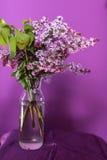 Flores lilás frescas em um vaso de vidro simples Foto de Stock Royalty Free