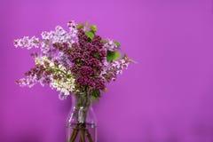 Flores lilás frescas em um vaso de vidro simples Fotografia de Stock Royalty Free