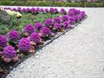 Flores lilás na cama de flor foto de stock royalty free