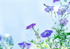 Flores lilás no campo imagem de stock