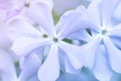 Flores lilás lilás, roxas e cor-de-rosa, flores da violeta em um dia ensolarado da mola fotos de stock