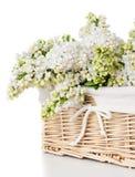 Flores lilás brancas em uma cesta isolada Fotos de Stock Royalty Free