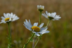 Flores lindas Fotos de archivo