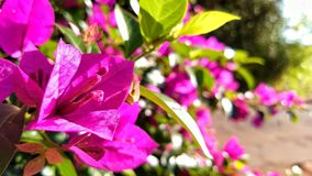 Flores Royalty Free Stock Images