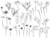 Flores - linha arte ilustração stock