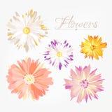Flores lisas do beautifil do estilo do vintage ajustadas Imagem de Stock Royalty Free
