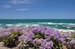 Flores litorais Fotografia de Stock Royalty Free
