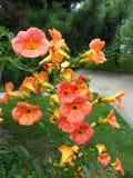 flores Llama-coloreadas Imagen de archivo libre de regalías