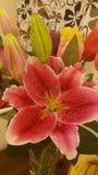 Flores llanas Imagen de archivo libre de regalías