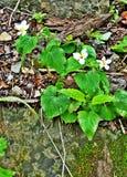 Flores lluviosas Imagen de archivo libre de regalías