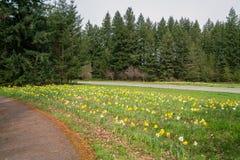 Flores a lo largo de la carretera nacional foto de archivo libre de regalías