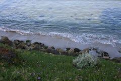 Flores a lo largo de la orilla en la puesta del sol Imagen de archivo libre de regalías