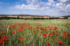 Flores a lo largo del camino de Santiago Imagen de archivo