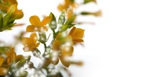 Flores mágicas fotografia de stock royalty free