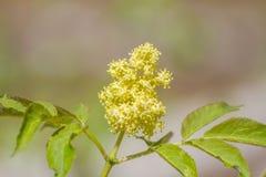 Flores más viejos de la flor en un fondo blanco imagenes de archivo