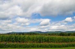 Flores, maíz, montañas y cielo Imagen de archivo libre de regalías