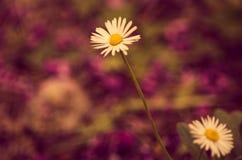 Flores macias no fundo da cor Imagens de Stock Royalty Free