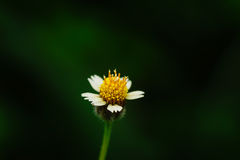 Flores macras Imágenes de archivo libres de regalías