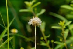 Flores macras Imagen de archivo